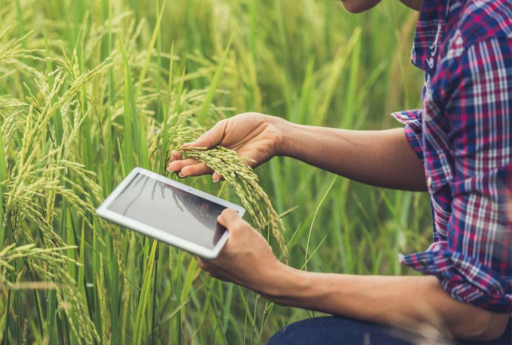 Verso il futuro dell'agroalimentare tramite dispositivi IoT based